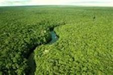 Vendo área para compensação ambiental na Amazônia