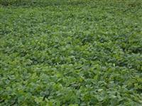 Vendo fazenda em Echaporâ dupla aptidão rica em água com outorga para irrigação