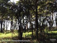 Propriedade rural na cidade de Descalvado - SP