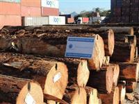 Madeiras para Exportação: Pinus, Eucalipto, Cavaco, Serrada, e Outras