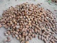 Venda de coco de babaçu