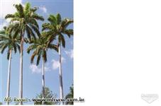 Palmeira Imperial