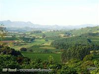 Fazenda de Café e Peixe em Espírito Santo do Pinhal