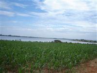 FAZENDA  / Norte do Estado do Paraná 283 alqueires