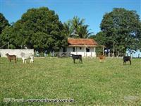 Fazenda de 79ha próximo a Teixeira de Freitas, Bahia