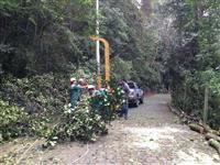 triturador florestal