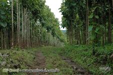 Fazenda em Lajeado-To