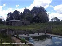 Chacara com 5 alqueires, 4 de planta, casa alvenaria, barracão, piscina, tanques