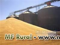 Lote de milho na regiao Norte de Mato Grosso