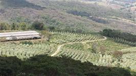 Fazenda de Café e Pecuária Leiteira em Minas Gerais
