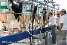 Procuro sitio para arrendamento para leite
