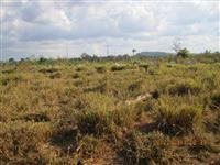 Fazenda em sao felix do Xingu