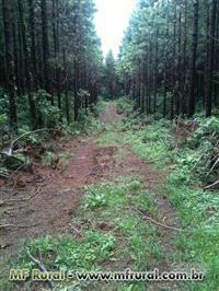 Áreas de reflorestamento