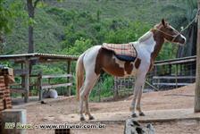Vendo Potro Pampa