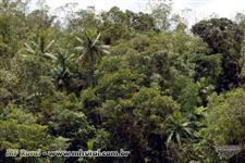 Floresta nativa primaria