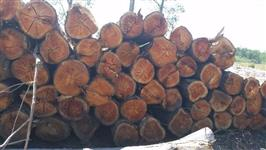 Toras de Pinus e Eucalipto, vende e compra no Rs e Sc
