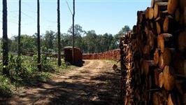 Postes, Lenhas madeira direto da floresta eucalipto e acacia