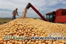Compra e venda de milho, ofertas direto do produtor