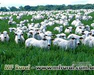 Fazenda em Barra do Garças - MT - Otima oportunidade - 290 ha