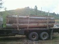 Madeira para Telhado e construção civil