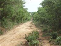 Compensação Ambiental em Bioma Cerrado Oeste da Bahia