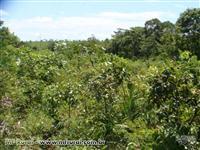 Fazenda com 82,28 ha em Paranã/TO
