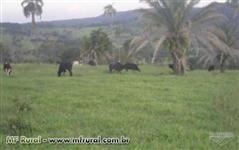 Fazenda  Baixadão - 22 alqueires em Goiânia - Go