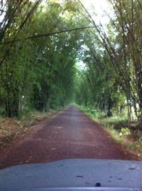 Fazenda em Castanhal Pa - Área 1160ha abertos - 100% Produtiva