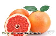 TORANJA (GRAPE FRUIT - LARANJA DOS EUA)