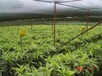 Telas Agrícolas de Sombreamento 35% 50% 65% 80%