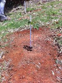 Mudas Nativas Reflorestamento
