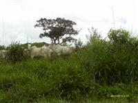 Fazenda no Pará 1087 alqueires