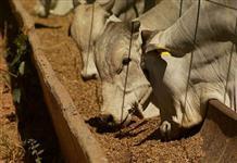 Poupa C�trica - Para nutri��o de bovinos