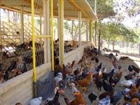 compro barracão de granja usado