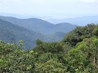 Oportunidade! Fazenda de 440 Hectares para reflorestamento ou cultivo