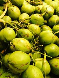 Coco verde, direto do nordeste