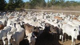 Crédito facilitado para Imóveis Rurais: Chácaras, Sítios, Fazendas e Terrenos
