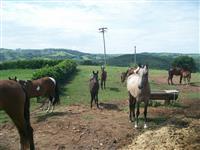 Fazenda - Haras Silver - Cód. 437