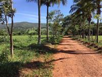 Fazenda  104Alqueiroes �s margens da BR-153