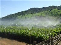 Fazenda 300 ha