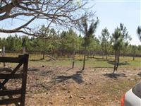 Fazenda Veneza Area total 575,2000 has