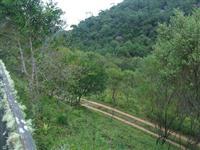 Arrendamento / Parceria - Plantação de Eucaliptos 72 Hectares