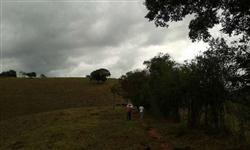 Fazenda 345 hectares para Café e Gado
