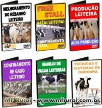 Kit - Gado Leiteiro - 6 cursos em DVDs