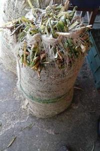 Vagem de Feijão Verde Canapu Saco 30kg R$ 6,00