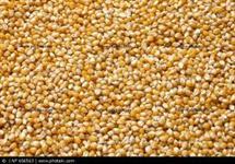 Milho seco a granel