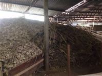 Cavaco de madeira de eucalipto