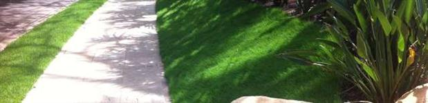 grama zeon zoysia