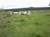 Sitio de 25 hectares em Campo Verde