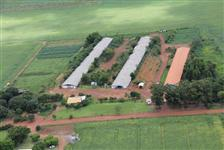 Granja a venda em Campo Verde